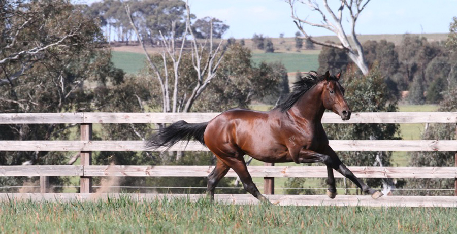 Heartbreaking Loss of Unencumbered